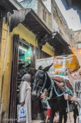 Fez_Morocco_People_and_Animals_0045b