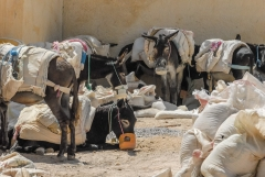 Fez_Morocco_People_and_Animals_0048